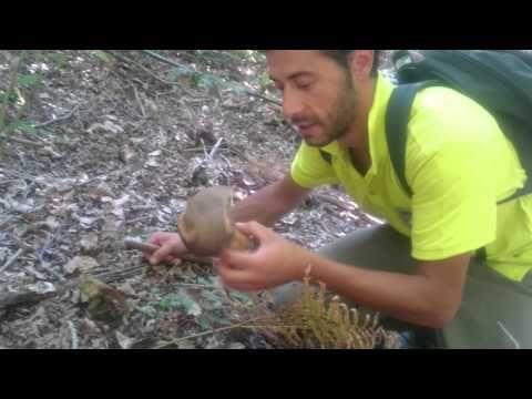 funghi porcini alpi apuane - YouTube