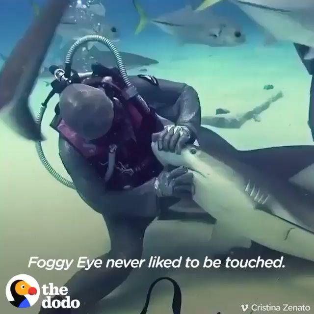 Brave Woman Saving Sharks Life's🦈