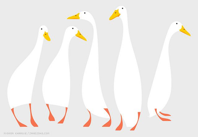 more great runner duck illustration Mignon Khargie great selection of birds there as well.