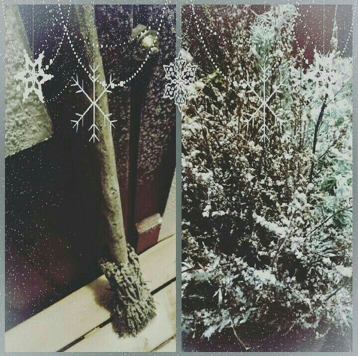 Frozen broomstick and mugworts