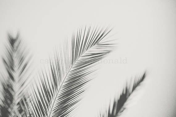 Ventura Palms II print