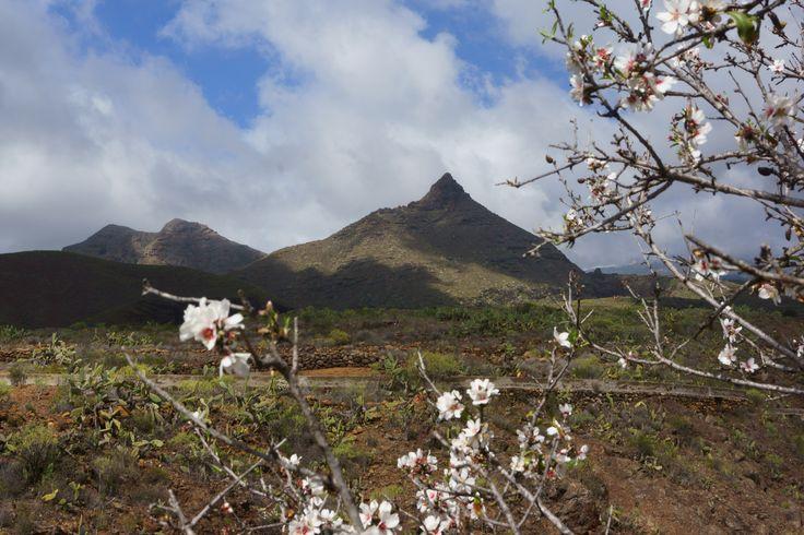 Roque Imoque / Tenerife