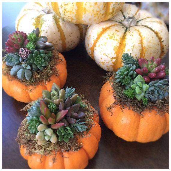 festa junina jardins : festa junina jardins:Mini Succulent (Orange) Pumpkin Living Arrangement // Mini Autumn