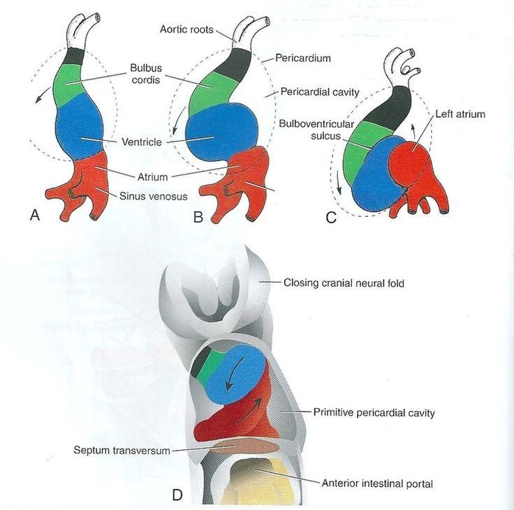 how is sex differentiation in human embryos crispr in Alaska