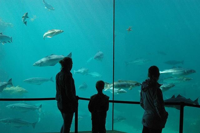 Aquarium of Aalesund.