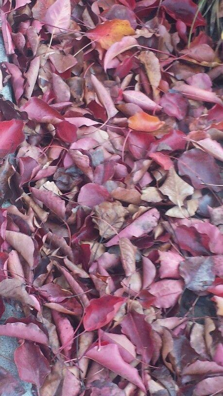 Fall 2016 Leaves