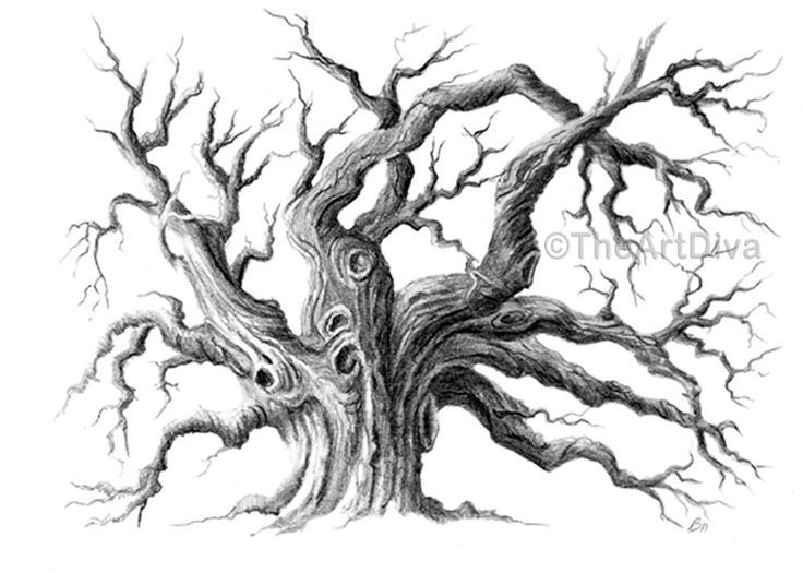 pencil drawing oak tree black and white archival 5 x by theartdiva 1250