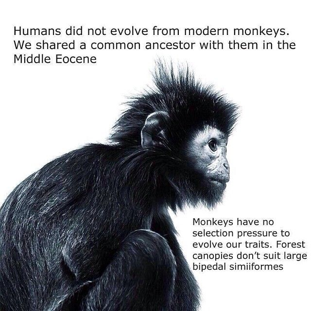 Is bipedalism a scientific principle or a theory?