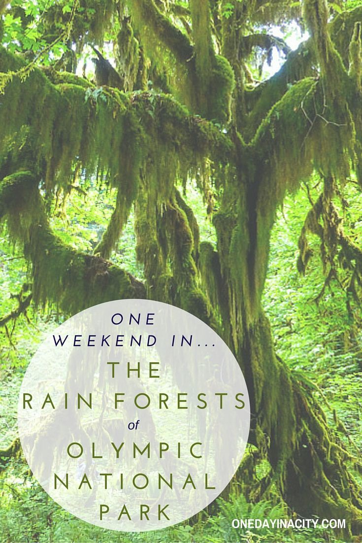 The temperate rain forests in Olympic National