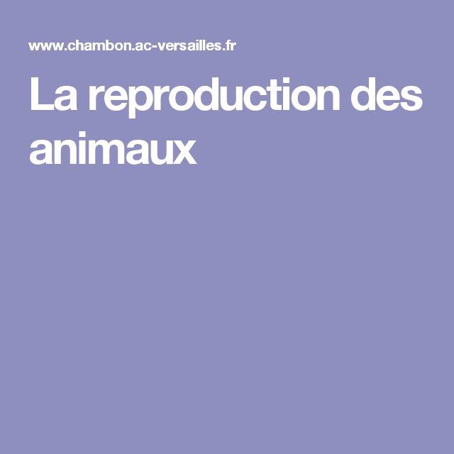 La reproduction des animaux