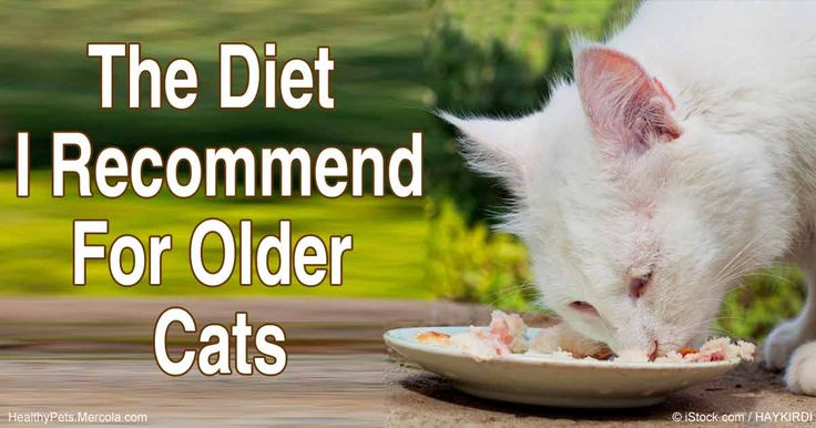 Foods that have not been highly processed are the most assimilable for a cat's body. The best food for most cats, regardless of age, is fresh food. http://healthypets.mercola.com/sites/healthypets/archive/2016/05/09/feeding-older-cats.aspx