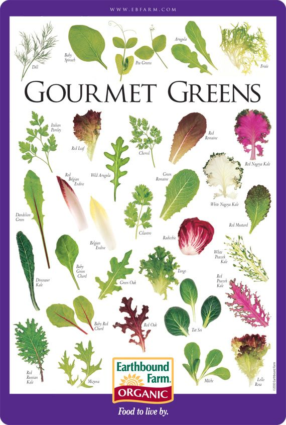 Gourmet Greens Salad ID Chart | Earthbound Farm Organic