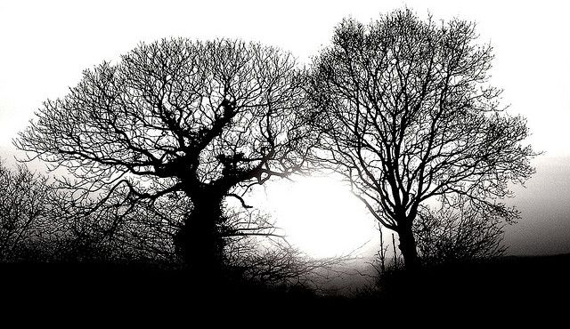 silhouette arbres hiver | Recent Photos The Commons Getty Collection Galleries World Map App ...