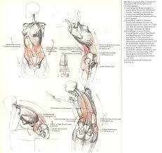 анатомия для художников - Поиск в Google