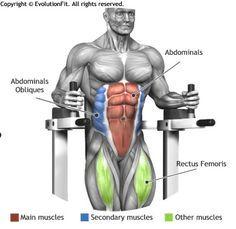 ABDOMINALS - LEGS STRAIGHT RAISE ON PARALLEL BARS