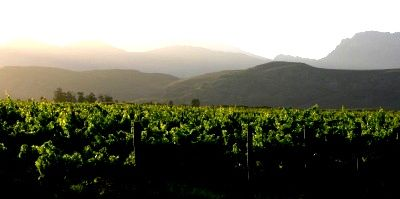 A amazing vineyard in the heart of the Boland!  Nature at it's best.