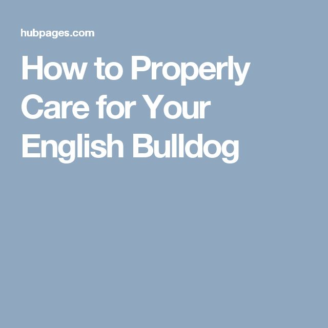 How to Properly Care for Your English Bulldog