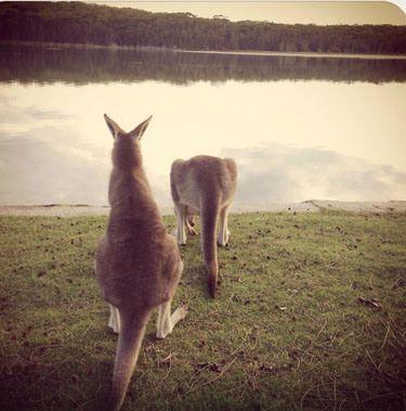 (c) Lake Conjola Entrance Holiday Park, Lake Conjola, NSW, Australia
