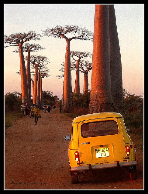 the baobabs in Madagascar. If only I hadn't been influenced by that ex.. so many years ago I would have spent 3 weeks here.