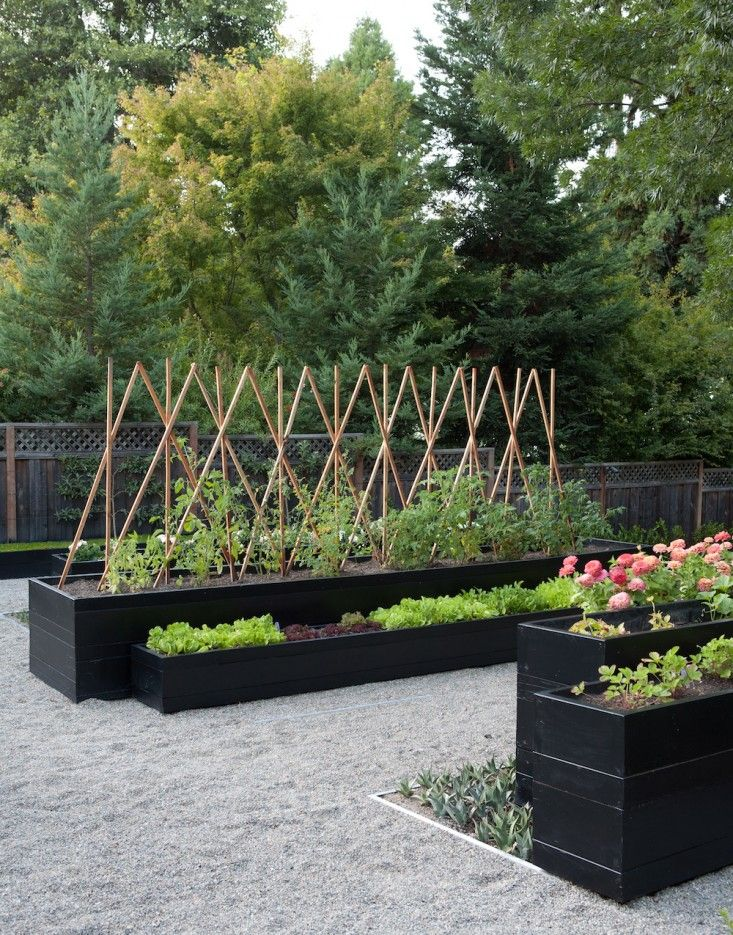 Modern potager - Finalist in Best Edible Garden Category of the 2014 Considered Design Awards, Gardenista. Kriste Michelini and Esther Arnold, designers. Trellised tomatoes and greens in planter boxes.