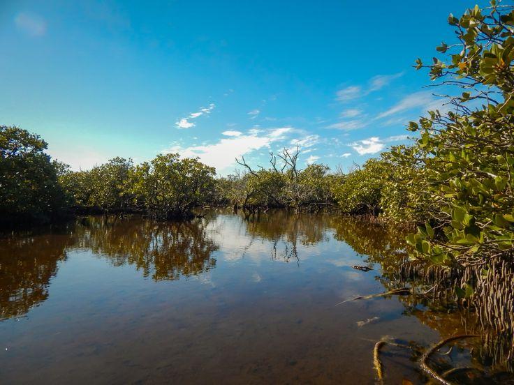 St Kilda mangrove boardwalk