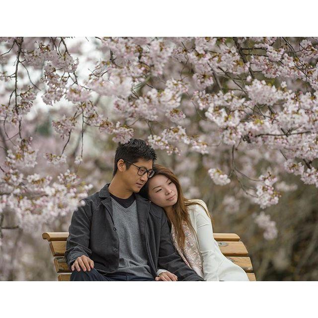【37frames】さんのInstagramをピンしています。 《Under the Cherry blossoms in Shinjuku. Love these two. A sakura dream. ... Photo by @37frames ... #37frames #engagement #engagementsession #preweddingsession #stylemepretty #theknot #bride #bridetobe #thedailywedding #weddingwonderland #shinjukugyoen #huffpostweddings #weddinginspo #soloverly #peoplescreative #sakura #huffpostido #photooftheday #prewedding #tokyo #tokyowedding #tokyoengagement  #tokyopreweddingphotographer #fundystoryteller…