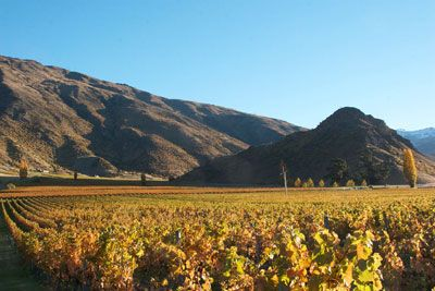 Mt Rosa Wines - Vineyard in the Gibbston Valley, Queenstown