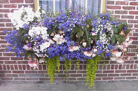 TIPS BIJ HET PLANTEN VAN KUIPPLANTEN, TERRASPLANTEN, BALKONPLANTEN EN PATIOPLANTEN: www.tuinadvies.be/bloembakken_beplanten.htm