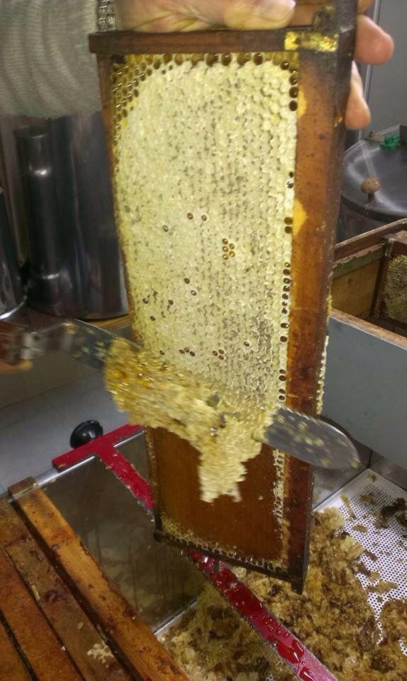 La miel de brezo es conocida por su color caoba oscuro y por su aroma inconfundible. Es muy recomendada en problemas cardíacos. MIEL DE BREZO- PEÑA SAGRA. Asociación Alto Nansa.