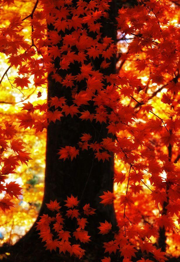 """✯ """"Orange Autumn"""""""