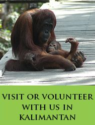 Visit or volunteer with us in Kalimantan (Borneo)   Friends of the National Park, Indonesia