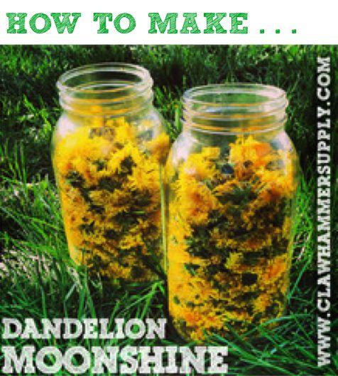 How To Make Dandelion Moonshine...http://homestead-and-survival.com/how-to-make-dandelion-moonshine/