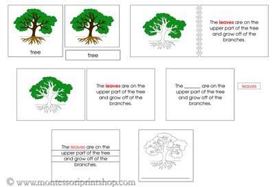 Montessori education in Canada
