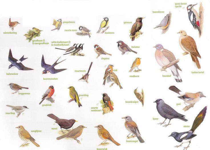 """Képtalálat a következőre: """"soorten vogels spanje"""""""