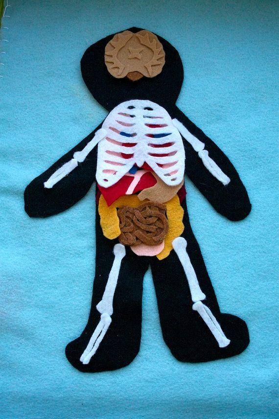 Human Anatomy Felt Set Science Toy Educational Felt