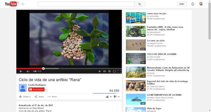 """Ciclo de vida de una anfibio """"Rana"""" - YouTube"""