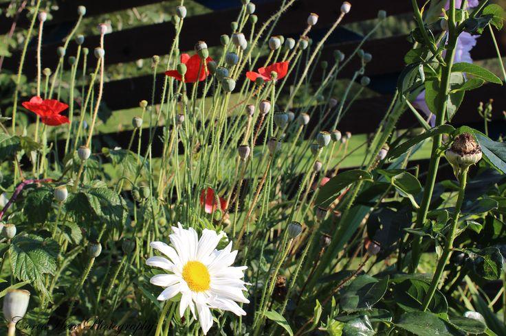 White flower #flowers