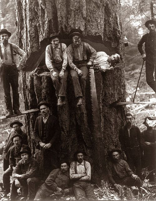 Lumberjacks taken around 1901…talk about Human Environment Interaction. Gotta show kids this they will think its so cool!
