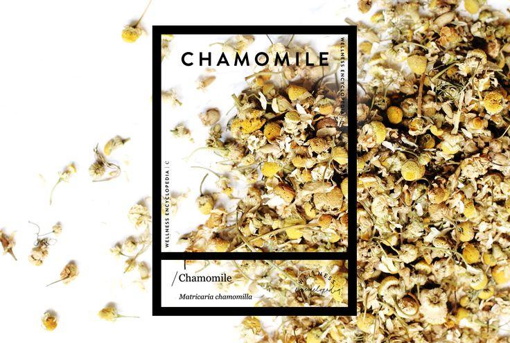 Wellness Encyclopedia: Chamomile + Calming Face Mist | Free People Blog #freepeople