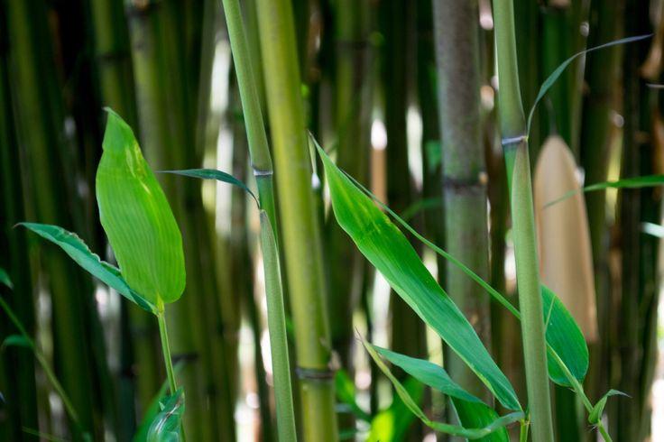 Giardino dei bambú