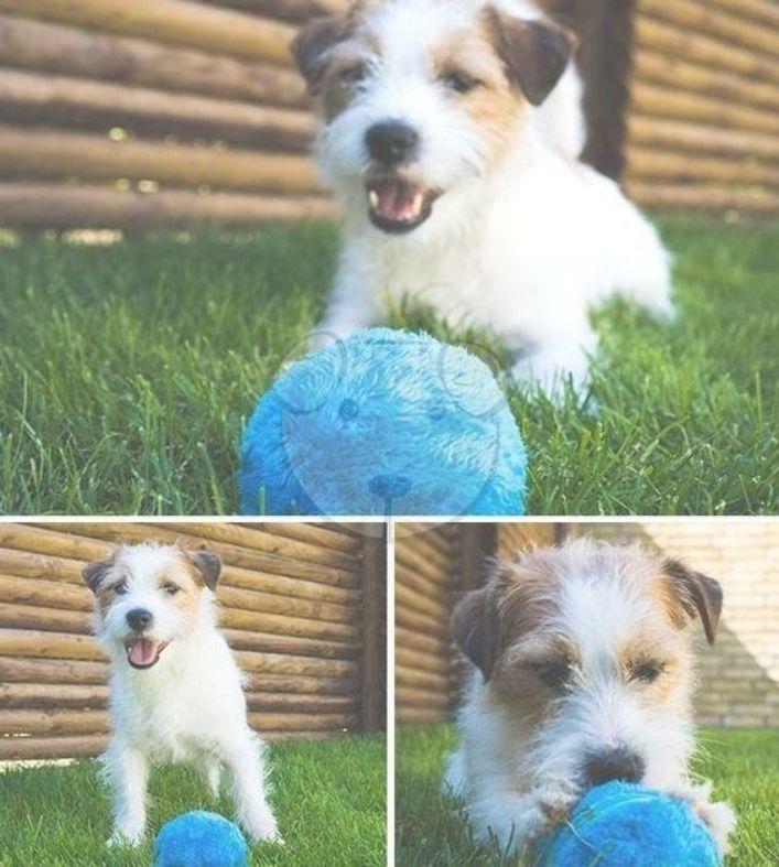 Dog Toys Interactive Milo Activation Ball Conscious Pets Pet Toys Dog Toys Dog Ball