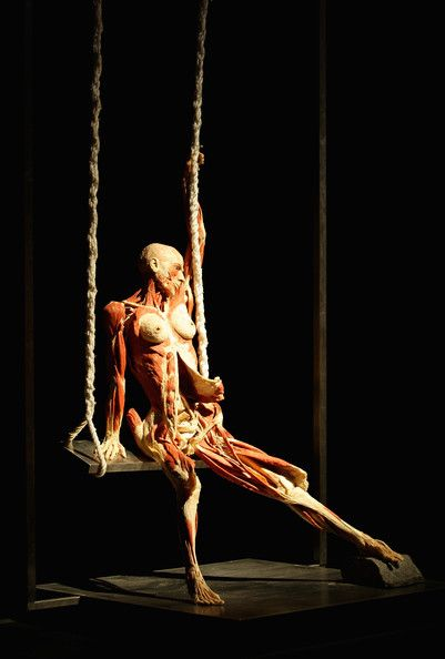 Different view on art, morbid to some, but why do we look? Plastination by Gunther von Hagens