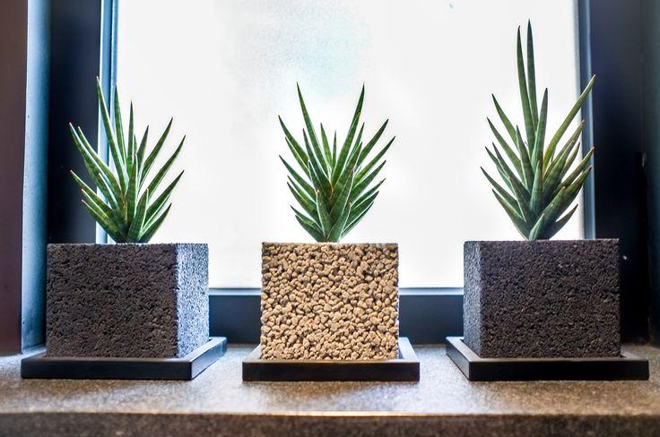 Vivid eco health show flat, Hong Kong by Liquid Interiors - plant, biophelia, stone plant pot, eco interior design, sustainable interior design, Vivid living