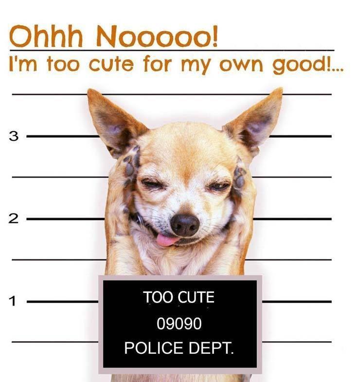 Cute Funny Female Dog Names