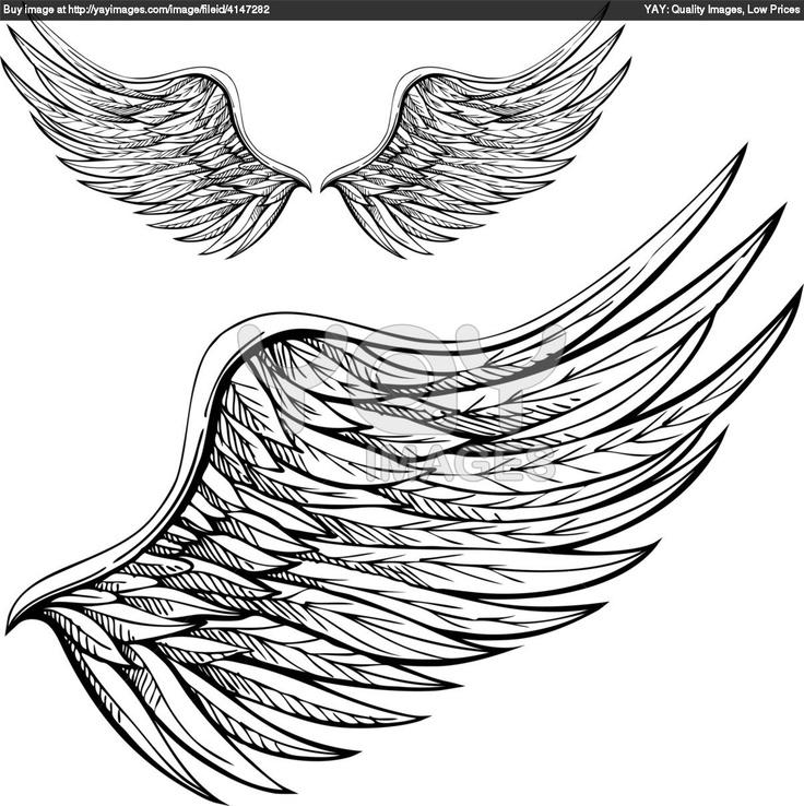 wings sketches | Royalty Free Vector of Cartoon Wings