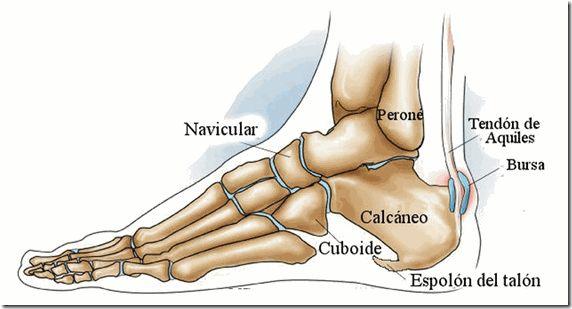 El espolón calcáneo se produce cuando los depósitos de calcio se acumulan en la parte inferior del talón. Cuando la fascia plantar o planta del pie se inflama, aparece un dolor punzante en el talón, el cual por lo general sucede en la mañana o cuando uno empieza a caminar. En el caso de que …