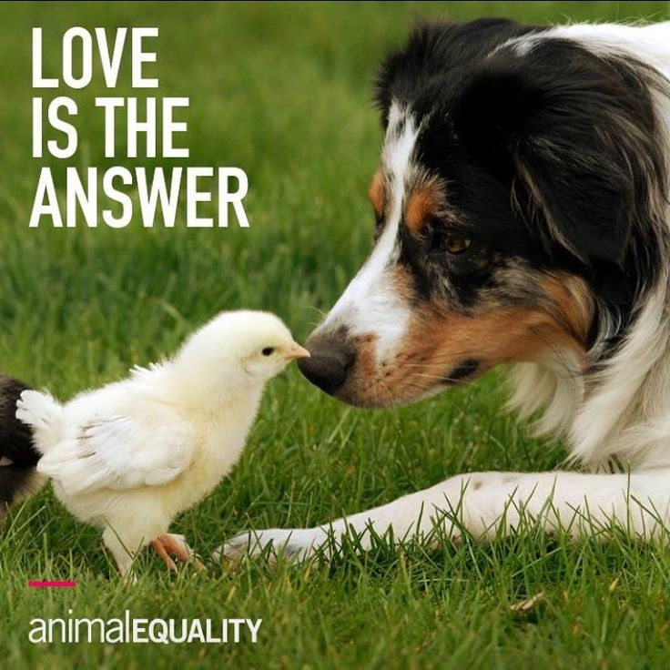 Regram @animalequality  Love animals so deeply and no more animal suffering.  L❤️VE is the answer!