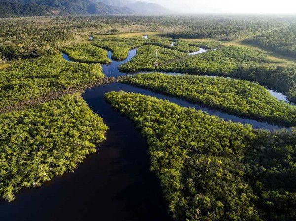 Biomas Brasileiros Resumo Mapa Mental Fauna E Flora Biomas Bioma Do Pantanal E Maravilhas Naturais