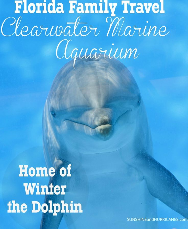 Love the Dolphin Tale movies? Interested in meeting the stars of the amazing true stories? Come learn all about marine life rescue and experience an educational family day on Florida's west coast. Meet Winter, Hope, and amazing sea creatures up close and make lasting memories! Florida Family Travel Clearwater Marine Aquarium