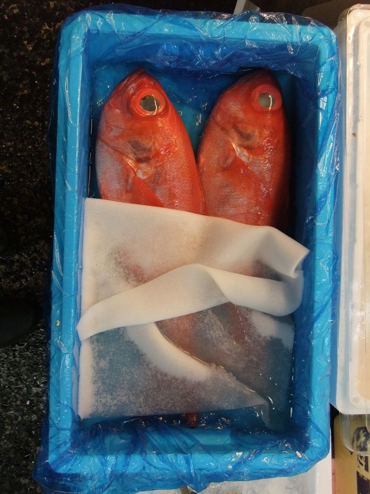 Tokyo Tsukiji (Fish Market)